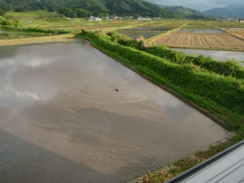 田んぼに水が入る